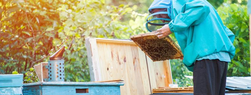 Backyard Buzz: A Beginners Guide to Backyard Beekeeping ...